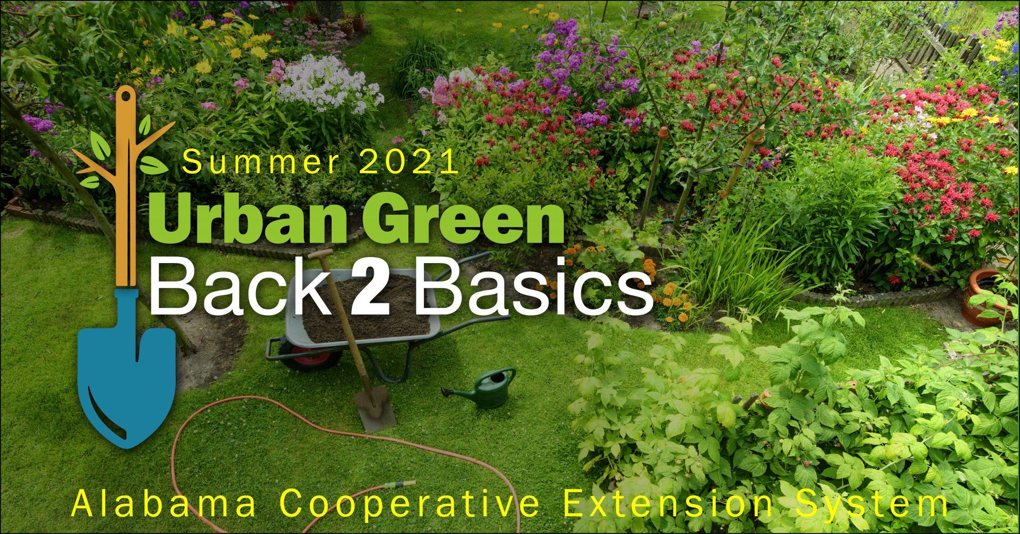 Summer 2021 Urban Green Back 2 Basics