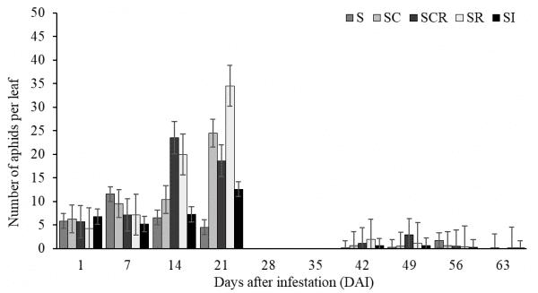 Figure 2. Sugarcane aphid population during 63-day period (from 7/11 to 9/12) in 2019.