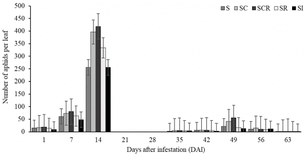Figure 1. Sugarcane aphid population during 63-d period (from 7/12 to 9/13) in Year 1.