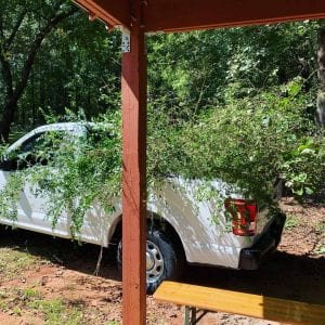 Truck loaded with trimmed branches