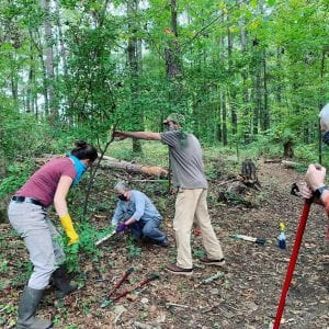 A group of people working in a wooded area
