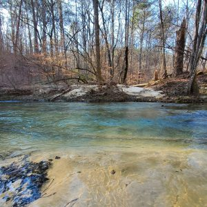 A creek in a wooded area