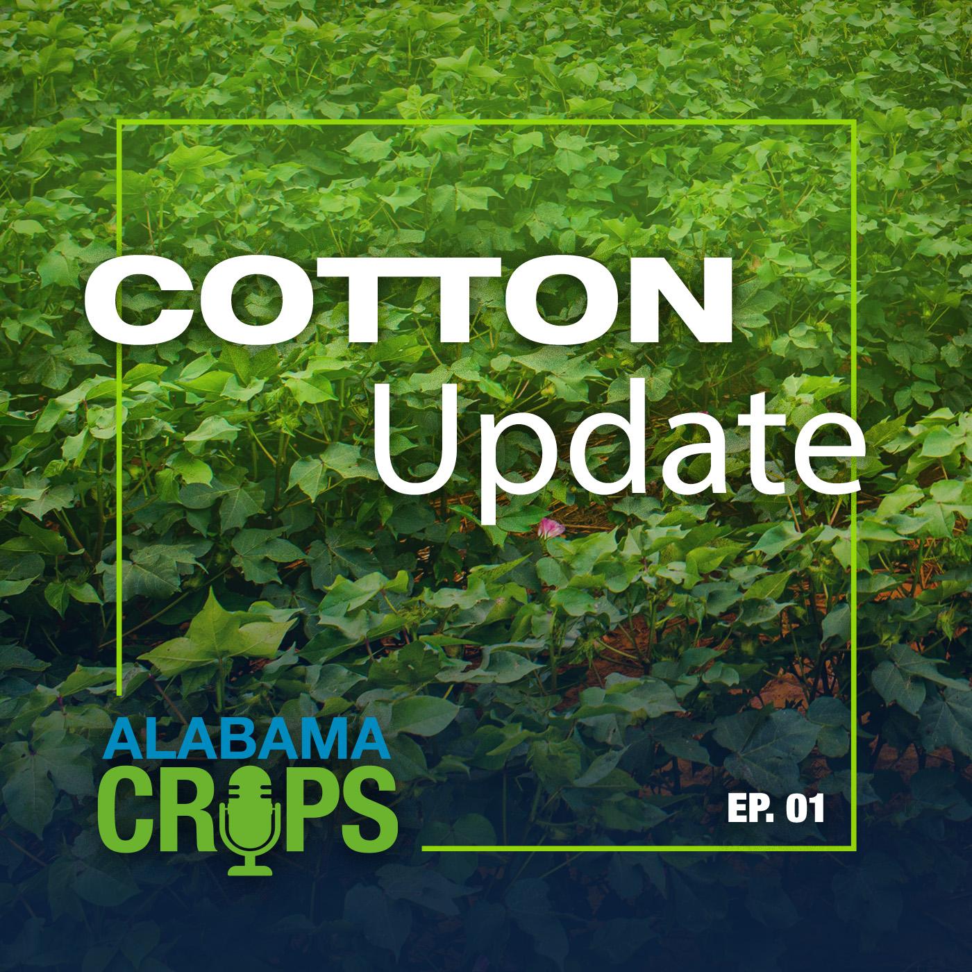 Episode 1 Cotton Update