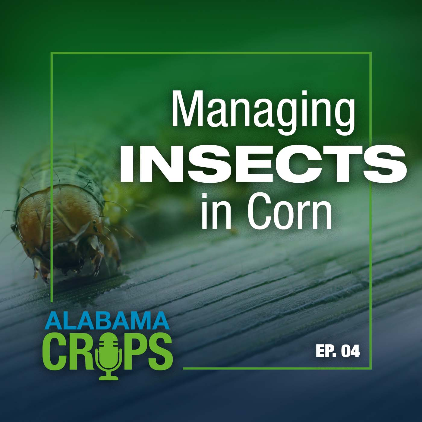 Managing Insects in Corn Alabama Crops Episode 4