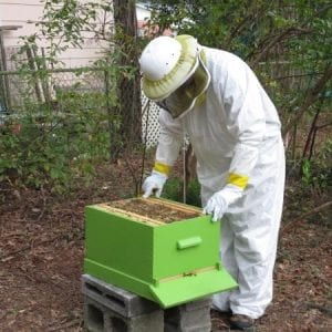 A beekeeper with bee boxes