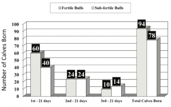 Figure 1. Estimated pregnancy and calving rates grouped by bull fertility based on a 63-day breeding season with 100 cows