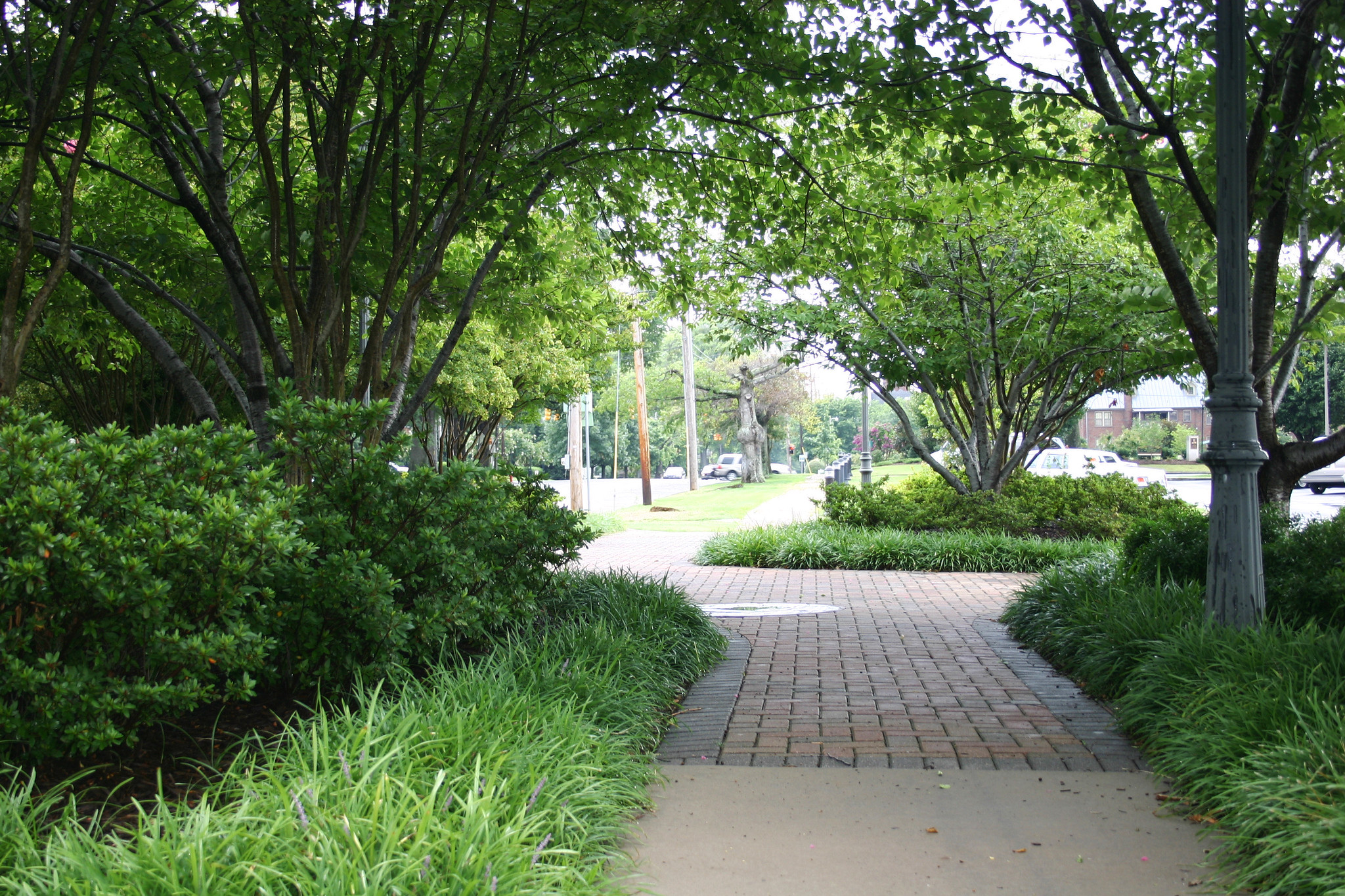 Urban trees and landscaping