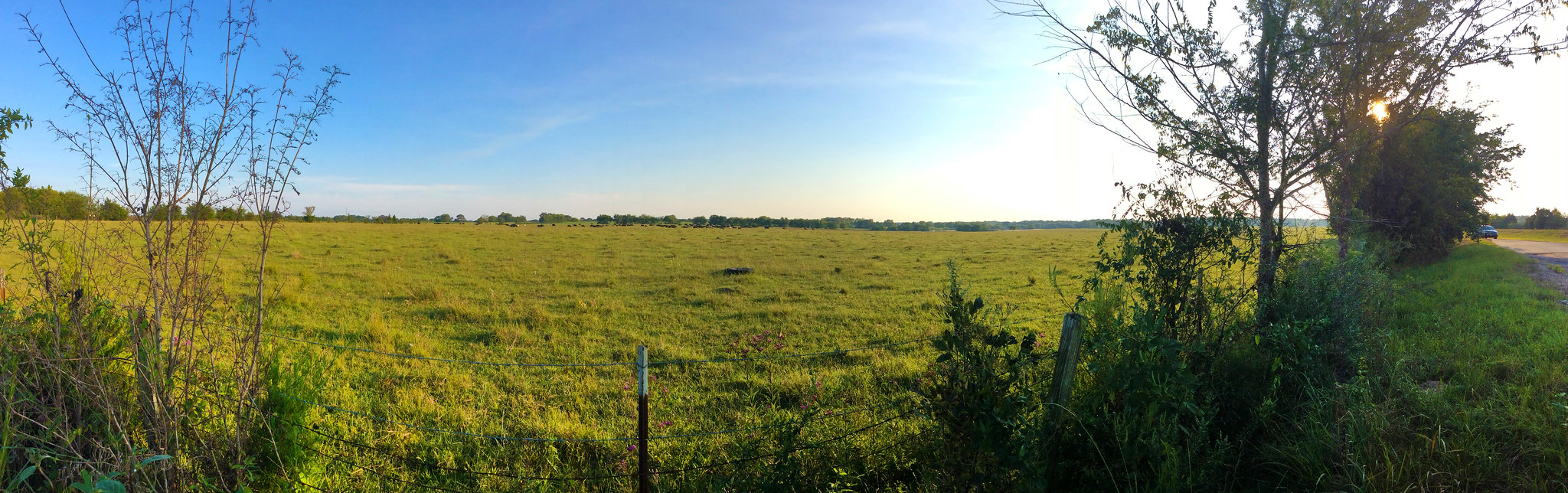 Wide shot of a cattle pasture