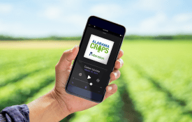 Alabama Row Crops Report Podcast playing on an iPhone