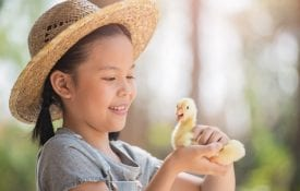 Young girl with a duckling in her hand