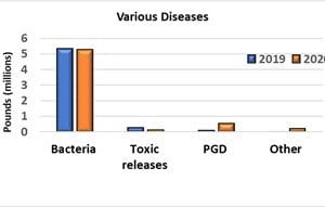 table depicting losses of channel catfish to various diseases