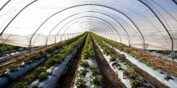 A high tunnel greenhouse