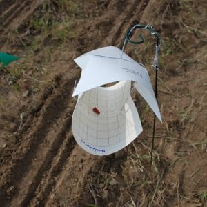 Figure 1. Sticky wing trap.