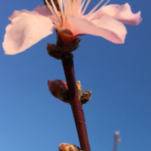 Figure 5. First Bloom