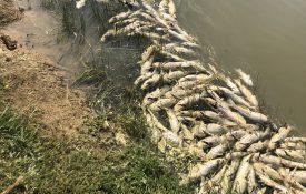 fish kill