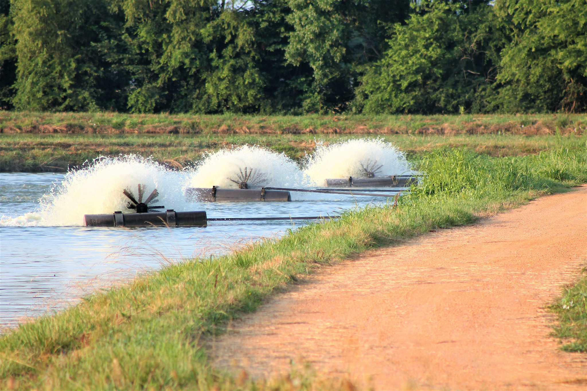 paddlewheel In a catfish farm. Producers eligible for ELAP funds.