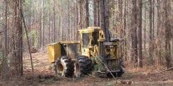 Harvesting Timber