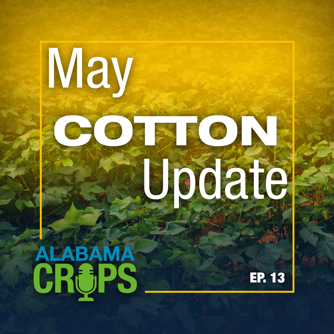 May Cotton Update