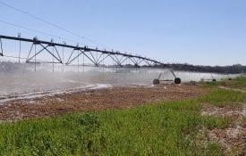 Irrigation pivot in operation