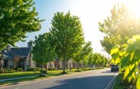 Trees on a neighborhood street.