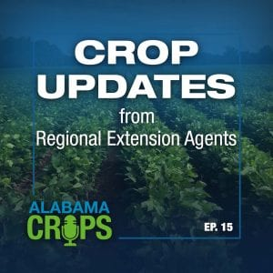 Crop Updates from Regional Extension Agents
