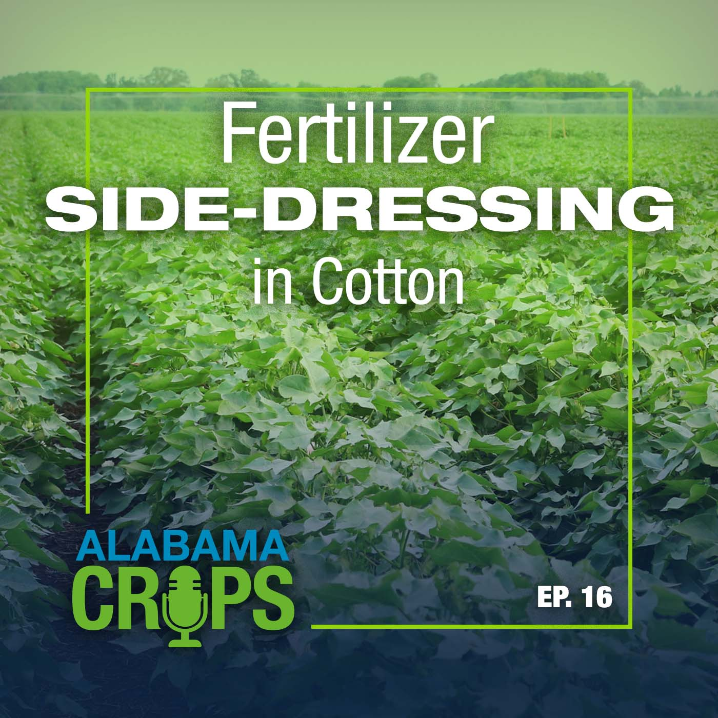 Episode 16 - Fertilizer Side-Dressing in Cotton