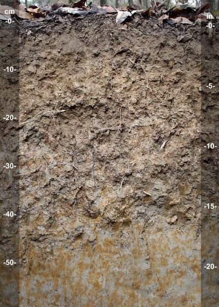 Figure 12. Gray soils may indicate the presence of standing water, as indicated at the bottom of this soil profile. (Photo credit: John A. Kelley, USDA Natural Resources Conservation Service)