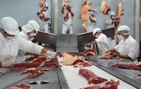 Butchers cutting beef in slaughterhouse, wearing hygienic masks