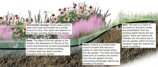 Figure 6. Design components of a rain garden.