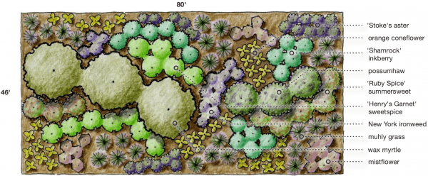 Figure 32. Example of a more natural planting plan, with plants grouped for color and arranged by height so that most plants and their colors are visible.