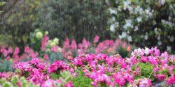 Raining in a garden