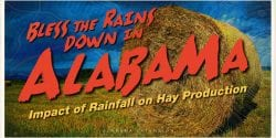 Bless the Rains Down in Alabama - Impact of Rainfall on Hay Production