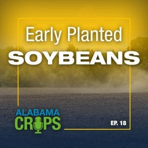 Episode 18—Early Planted Soybeans