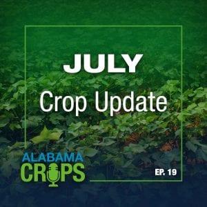 July Crop Update Podcast