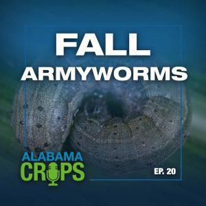 Episode 20—Fall Armyworms Alabama Crops