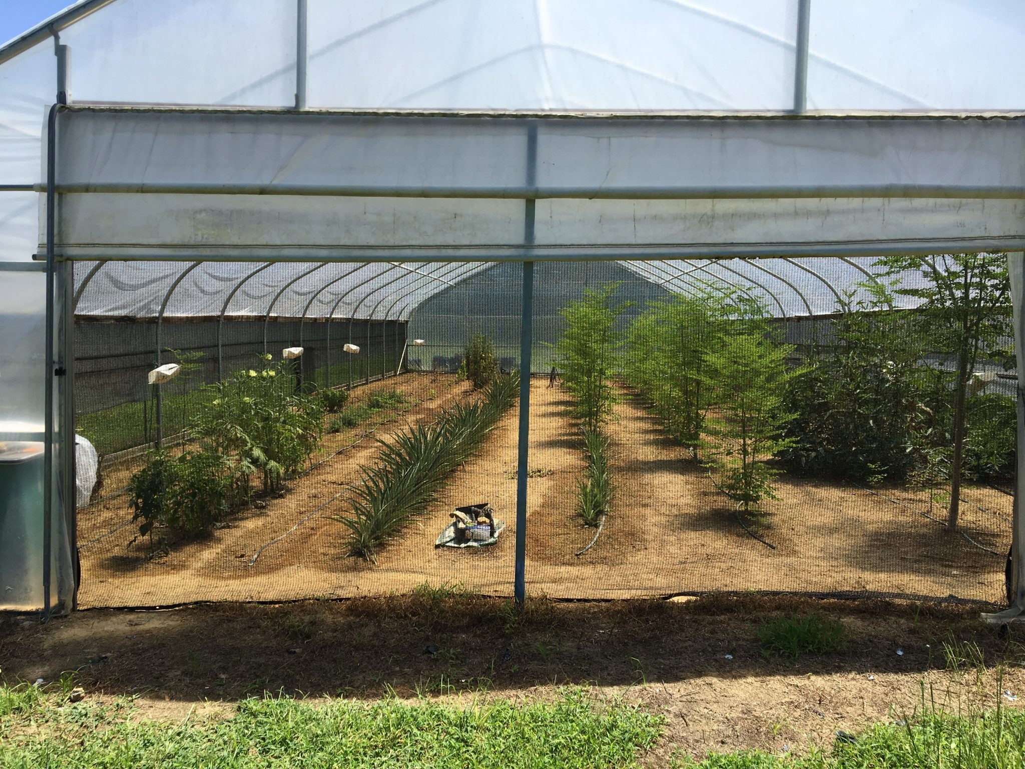 Figure 1. The HTPE system uses woven black shade cloth installed under the sidewall plastic and end walls.