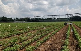 Figure 1. Center pivot irrigation system and setup of water collectors during a uniformity of water application test.