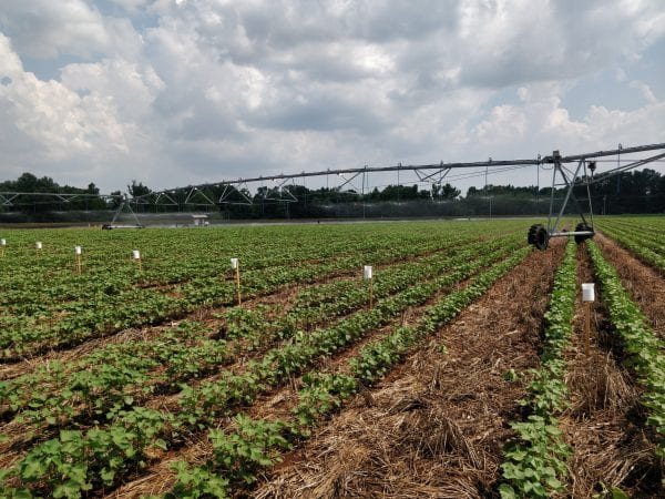 Center pivot irrigation system and setup of water collectors during a uniformity of water application test