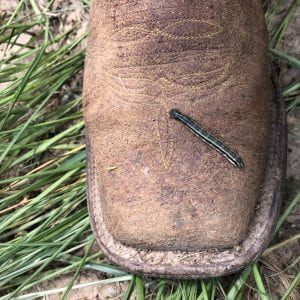 fall armyworm on a boot