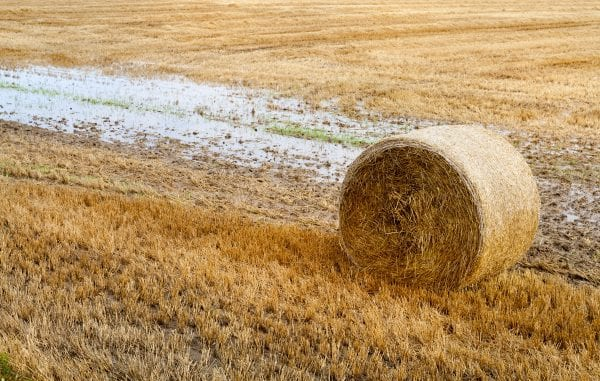 Baled hay beside a rain puddle in a field
