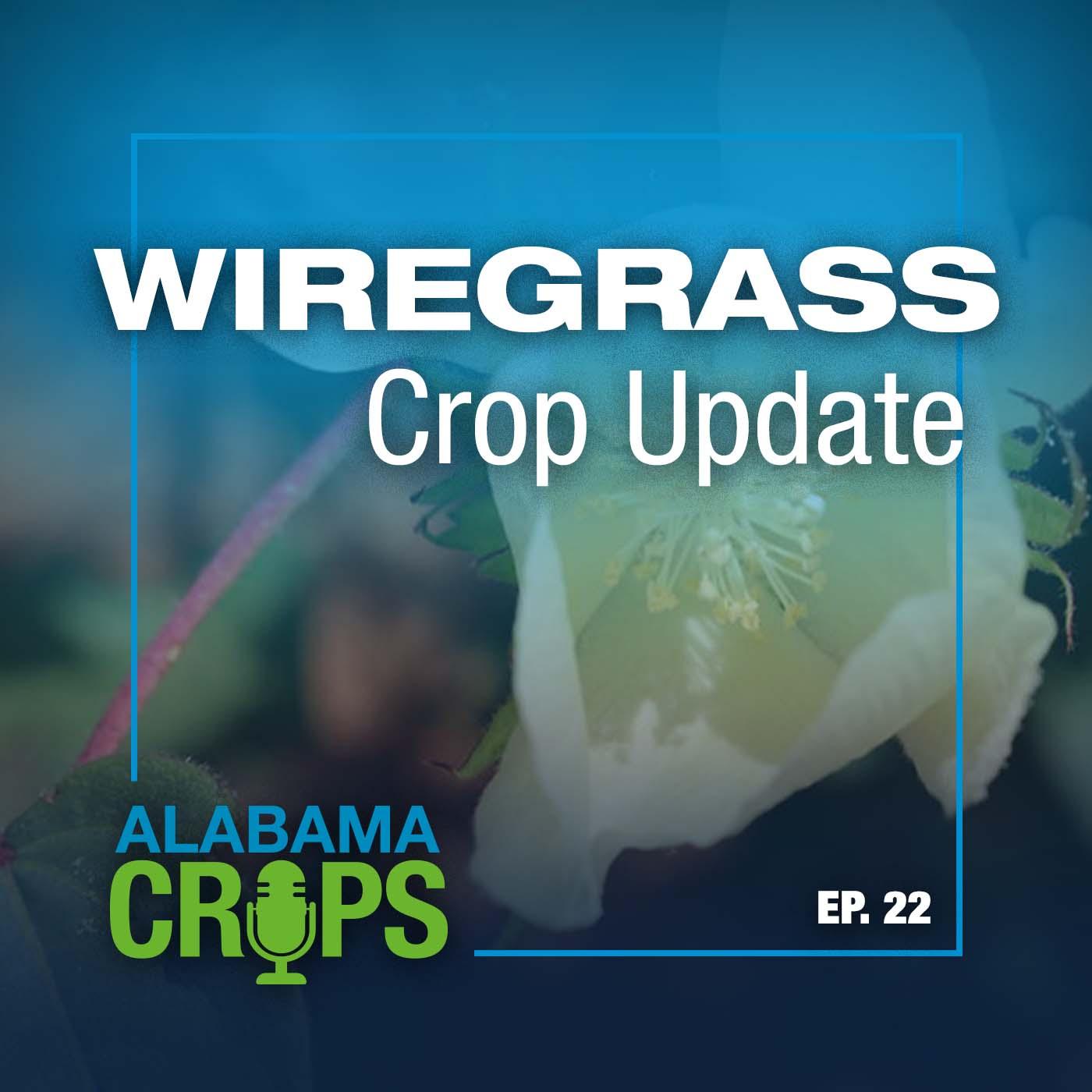 Episode 22—Wiregrass Crop Update
