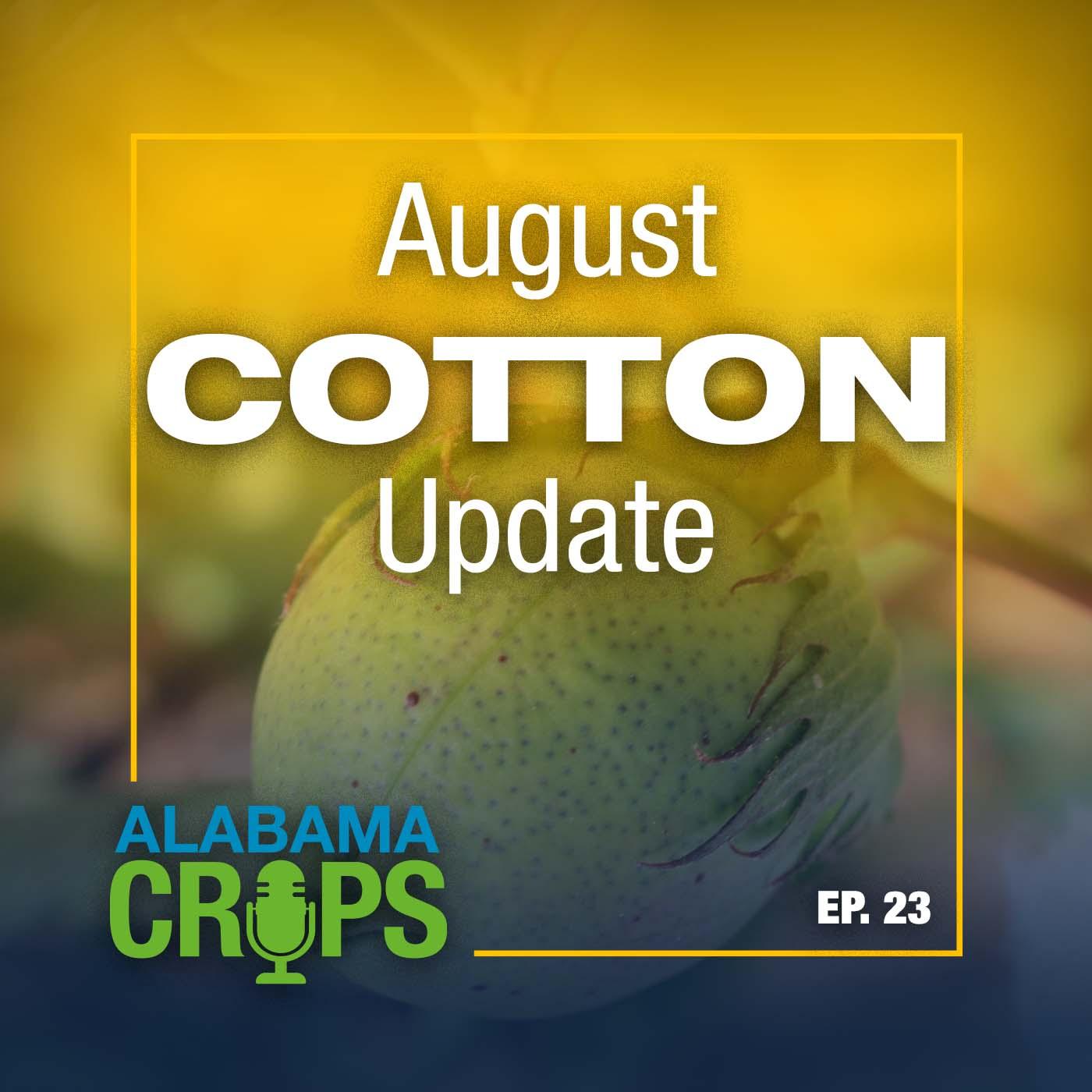 August Cotton Update Alabama Crops Report Episode 23
