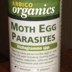 Figure 3. Egg parasite (Trichogramma minutum)
