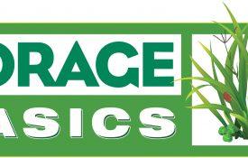 Forage-Basic_Logo