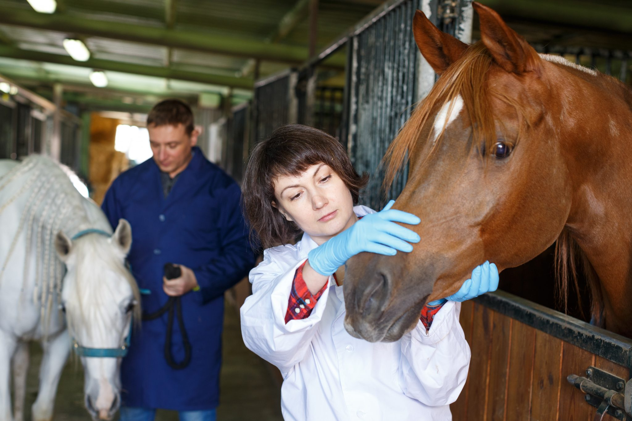 Female Vet Giving Medical Exam to a Horse