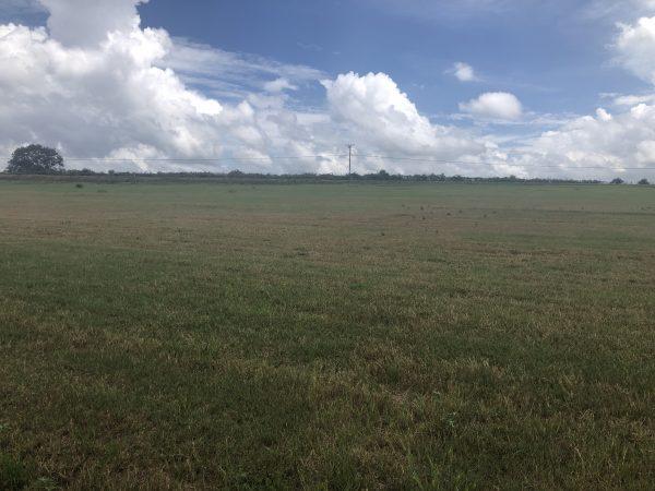 Fall armyworm damaged pasture