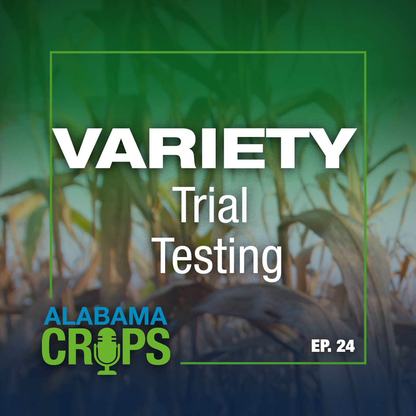 Episode 24 Variety Trial Testing