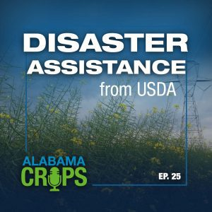 Episode 25—Disaster Assistance from USDA