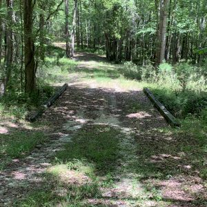 Creek crossing bridge in a wooded area