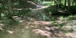 Stream crossing at Mary Olive Thomas Demonstration Forest